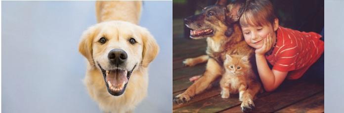 Greenies潔牙骨話你知: 狗狗換牙要注意什麼?