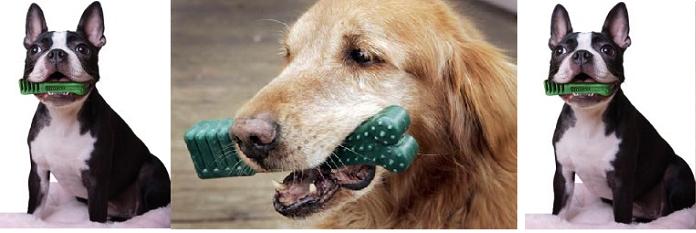 Greenies潔牙骨話你知:預防牙結石攻略